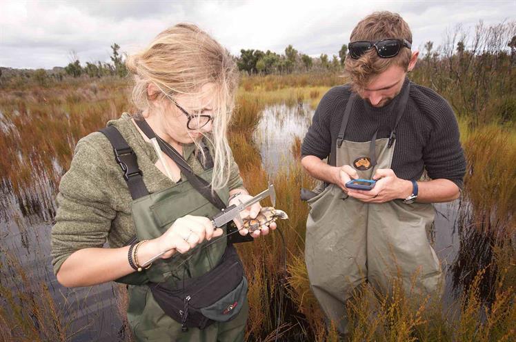 Saving the western swamp tortoise